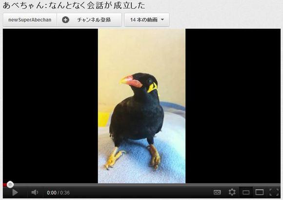 あべちゃん九官鳥