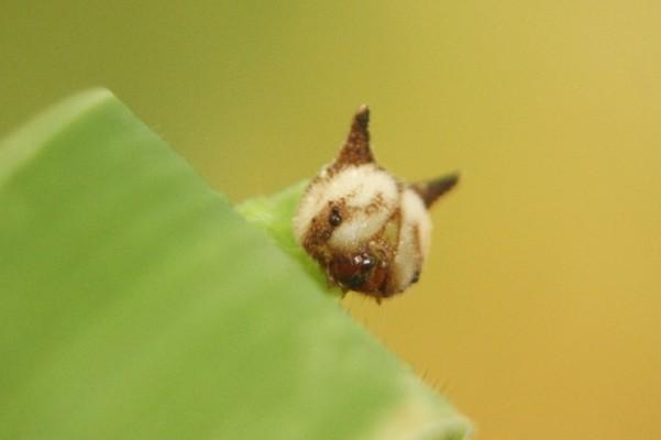 hellokitty- Caterpillar (2)