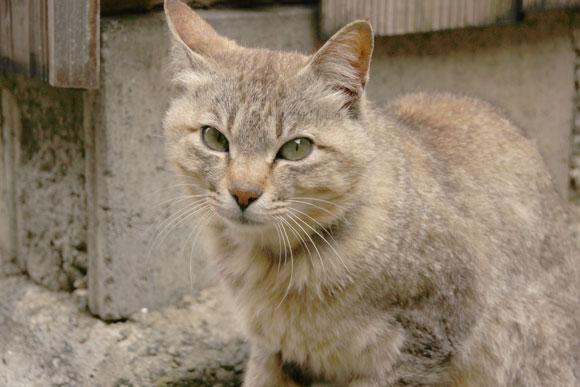 aoshima (37)