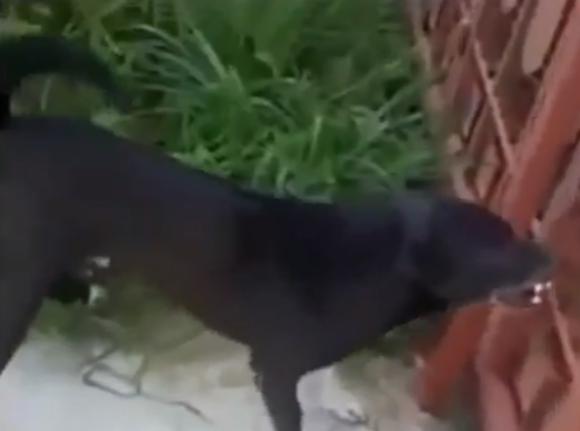 dogfight001