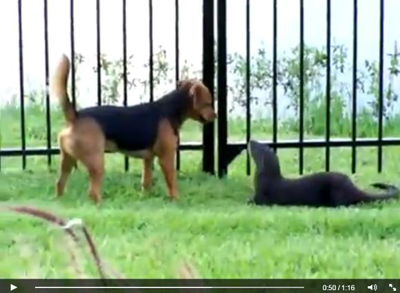 dogfriendship