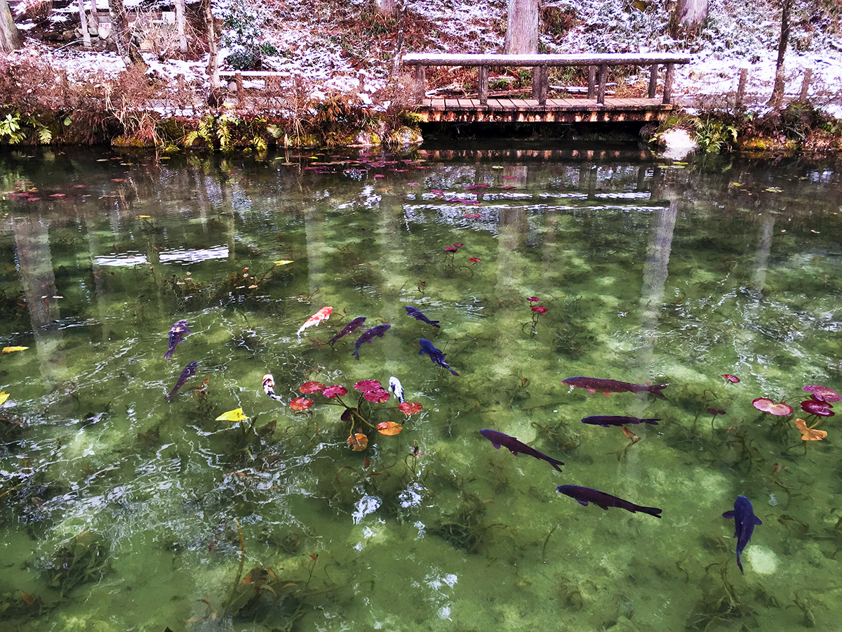 Monet Pond01