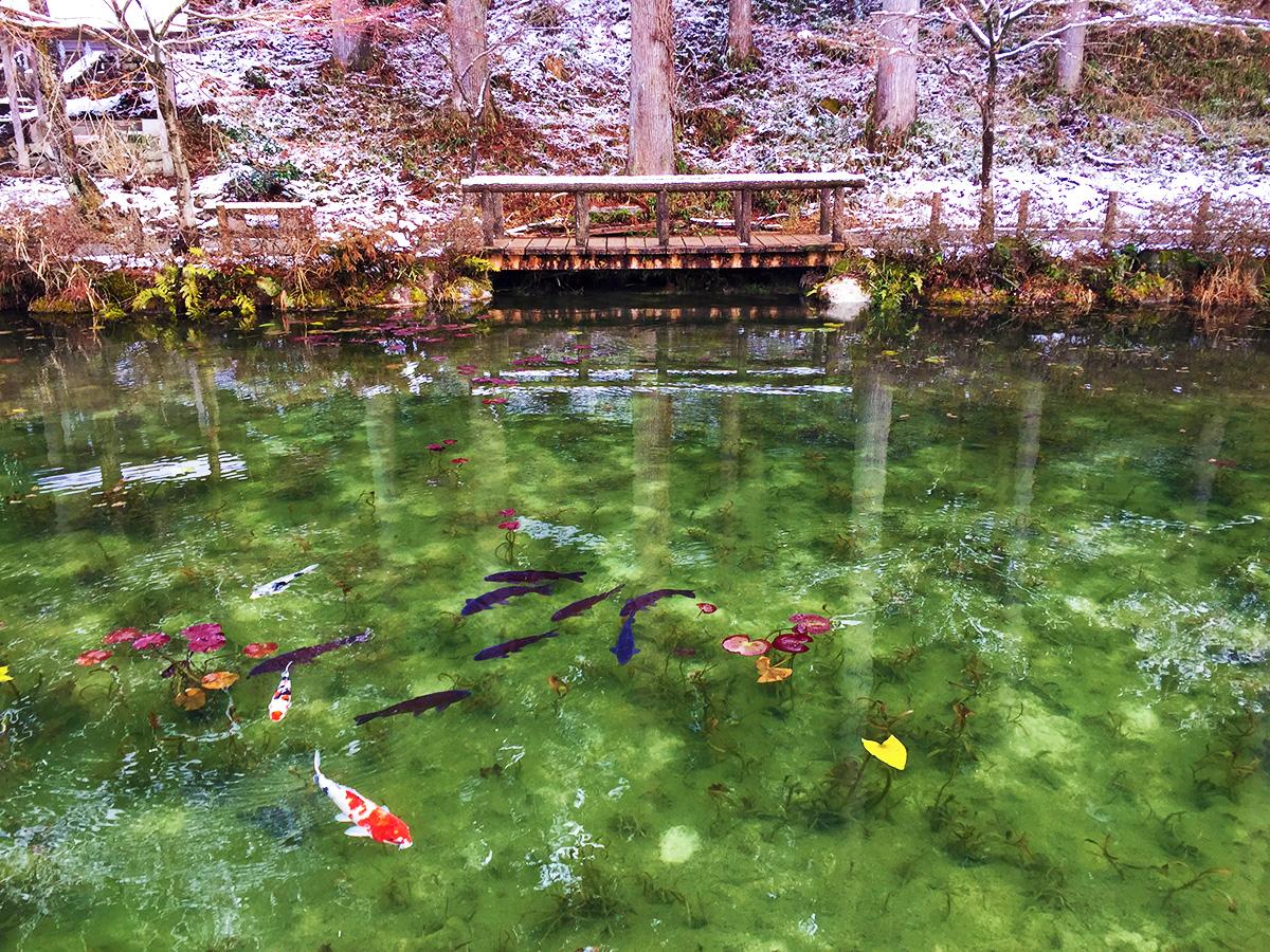 Monet Pond15