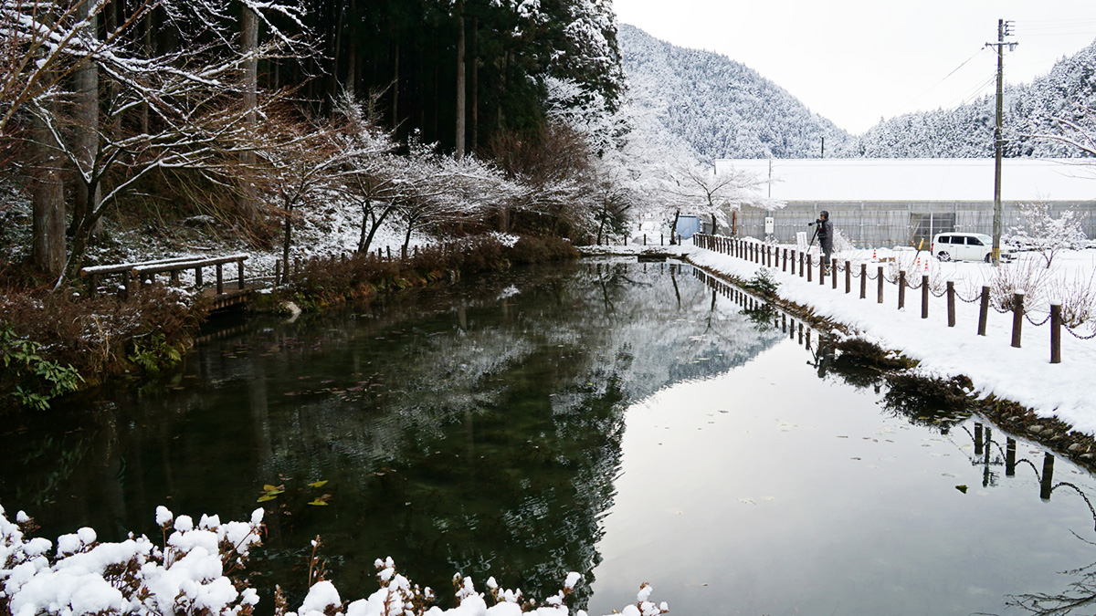 Monet Pond16