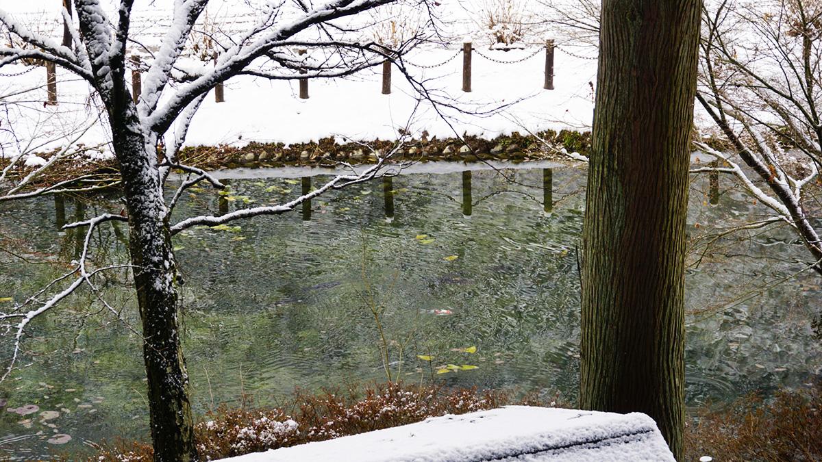 Monet Pond21