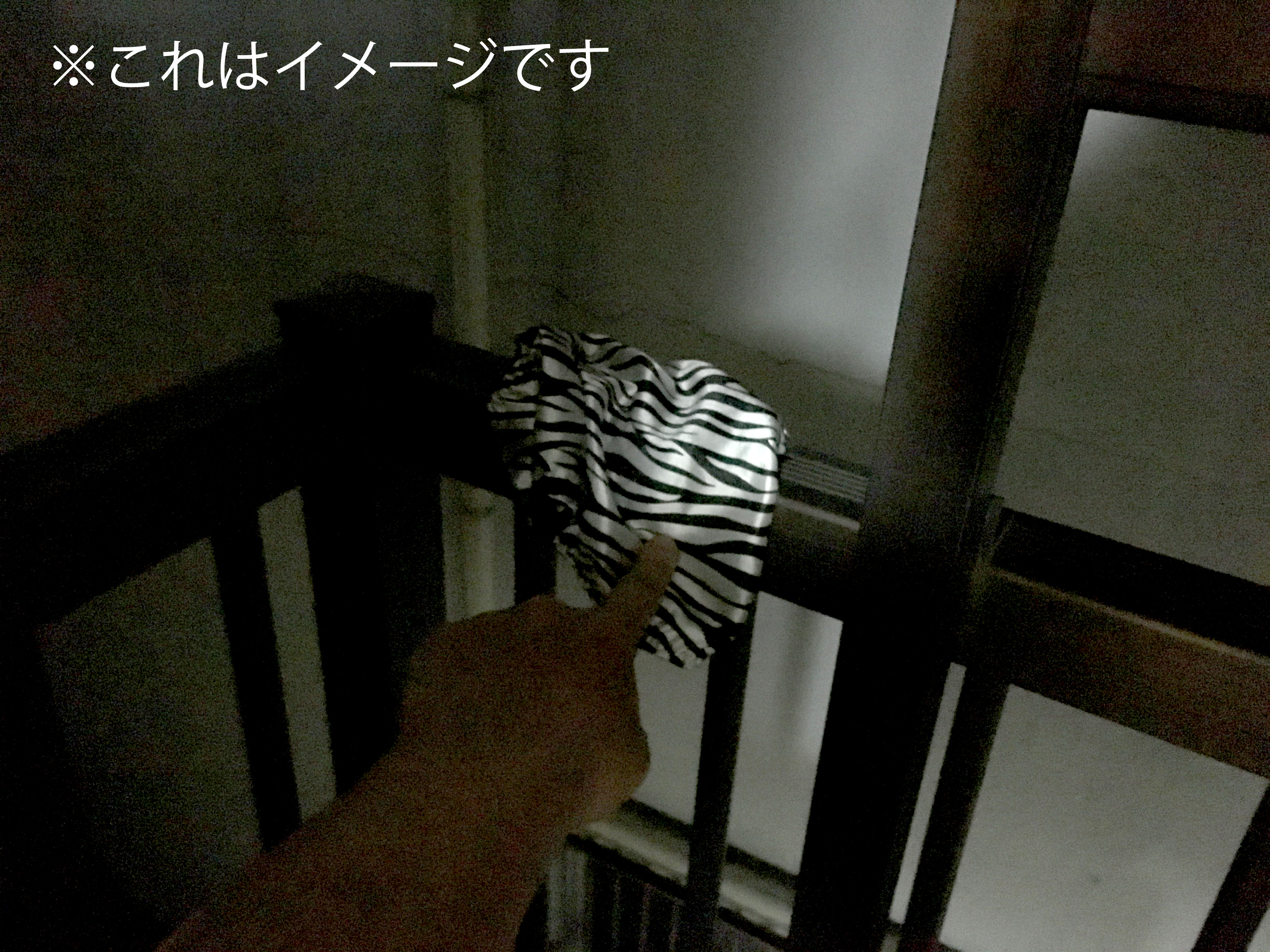 zebra6