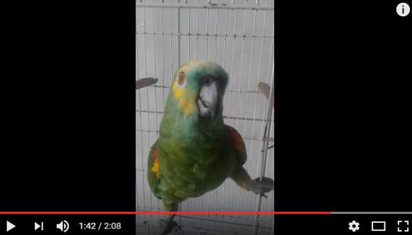 singingparrot