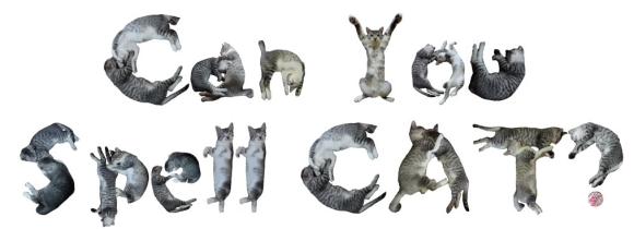 Can you spell cat1
