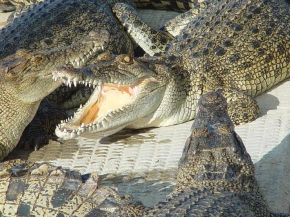 crocodile-farm-020713