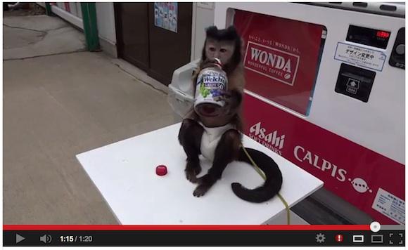 monkey drink