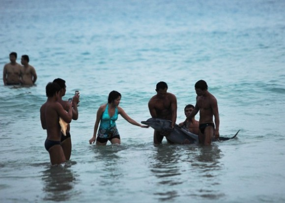 tourists-taking-pictures-with-stranded-dolphin-angers-netizens-02-600x428
