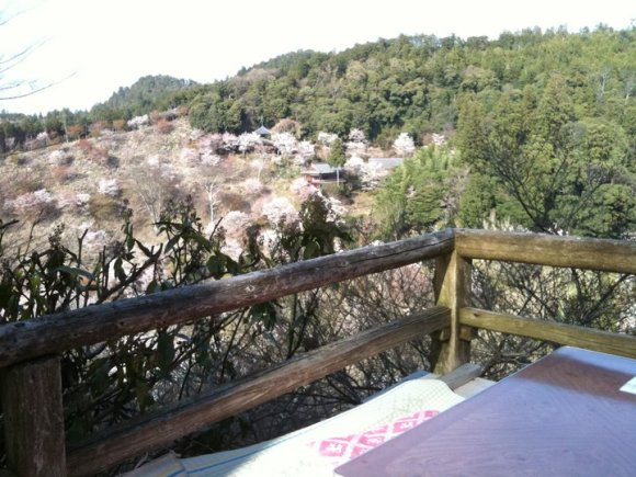 yoshino tea hiking