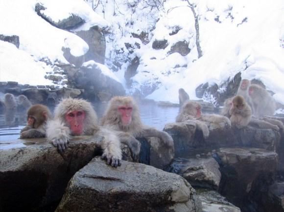7. Jigokudani Monkey Park