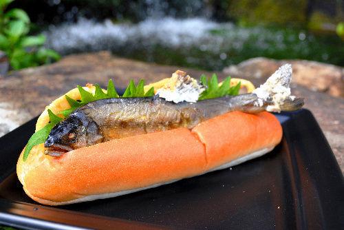 fishdog1
