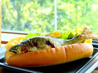 fishdog3