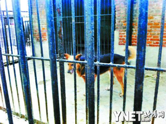 """Nice try! Zoo in China puts a """"lion"""" on display, visitor realizes it's actually a dog2"""