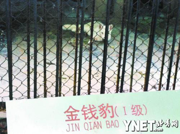 """Nice try! Zoo in China puts a """"lion"""" on display, visitor realizes it's actually a dog3"""