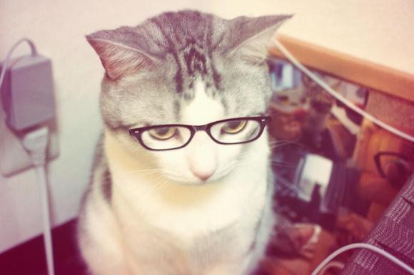 glasses cat01