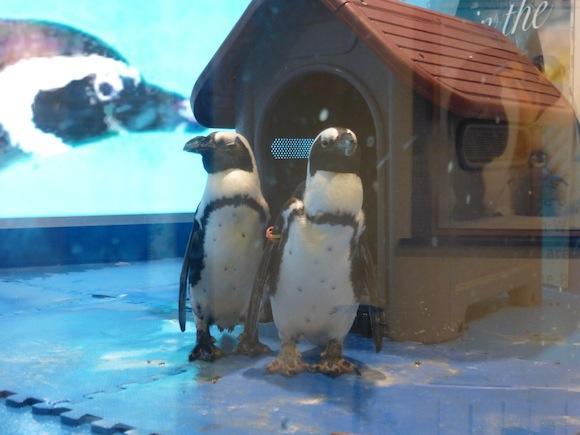 Penguin Bar two 2