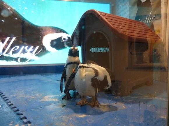 Penguin Bar two 3
