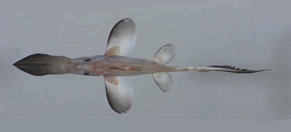 2013.11.25 mystery fish iii