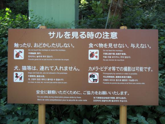 Jigokudani monkey (23)