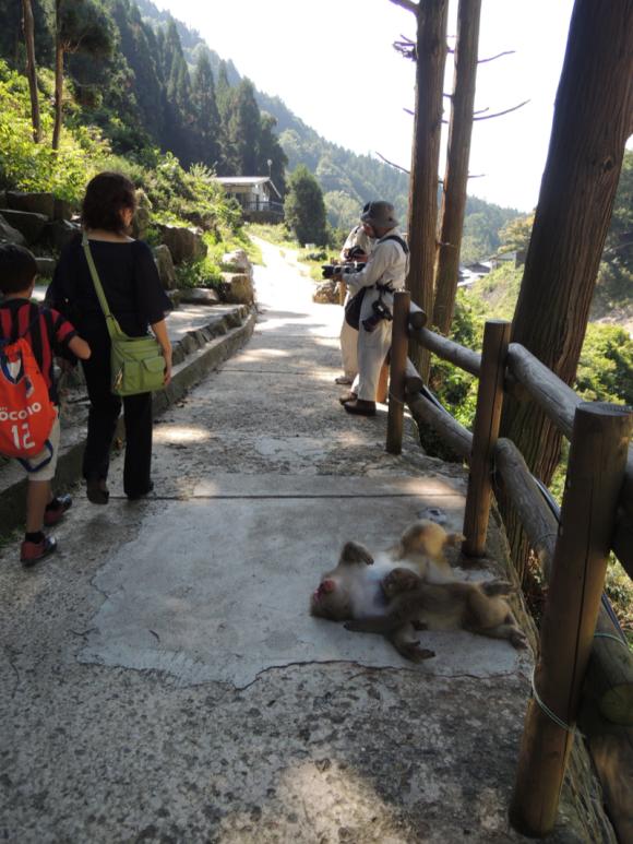 Jigokudani monkey (5)