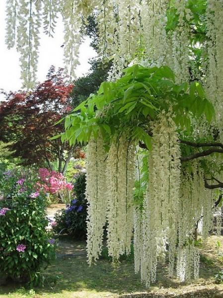 Kawachi Fuji Garden6