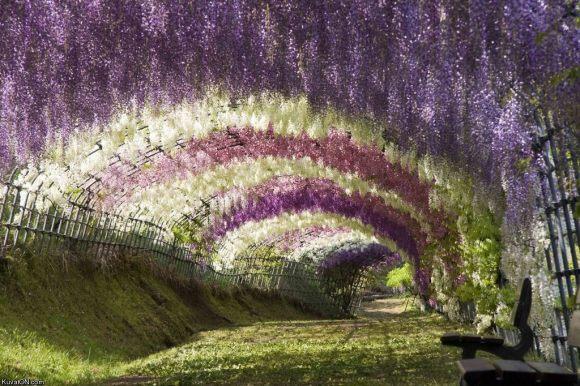 Kawachi Fuji Garden9