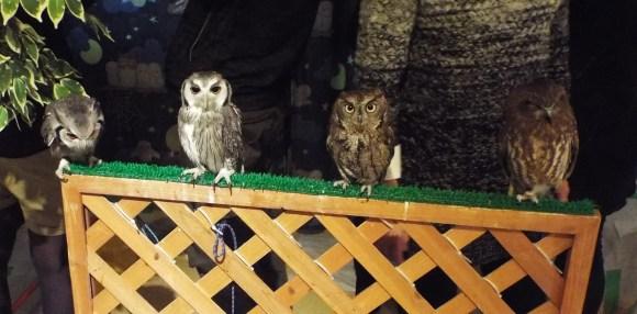 owls (10)