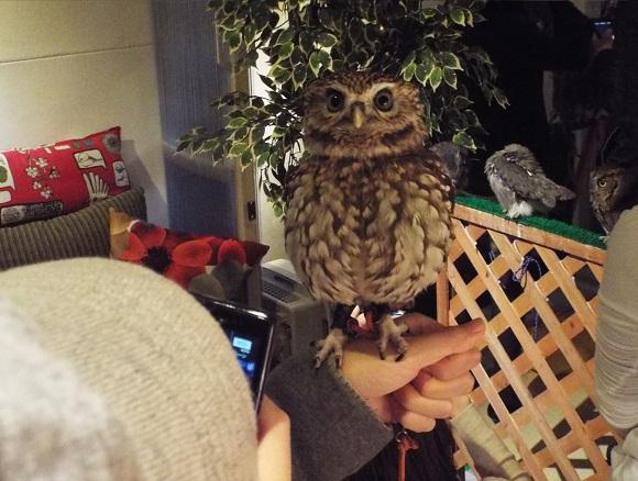 owls (11)