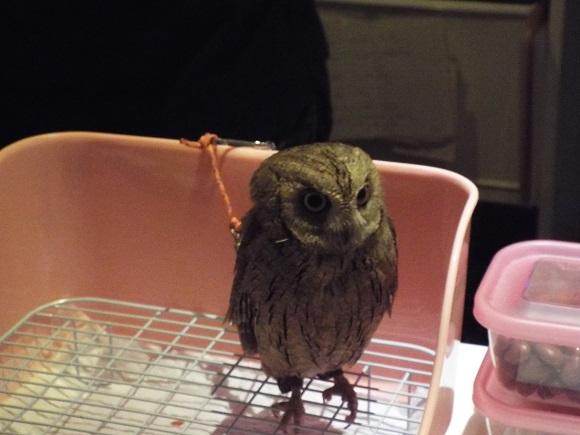 owls (15)