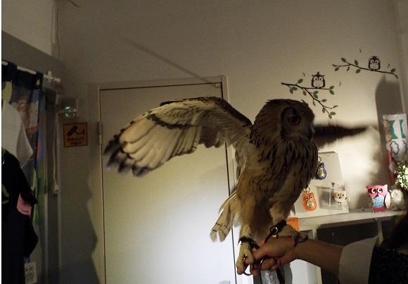 owls (17)