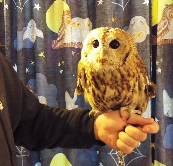 owls (20)