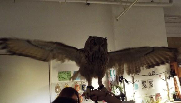 owls (24)