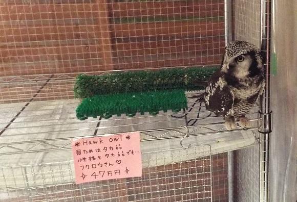 owls (31)
