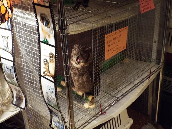 owls (33)