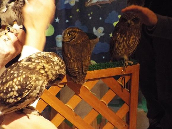 owls (36)