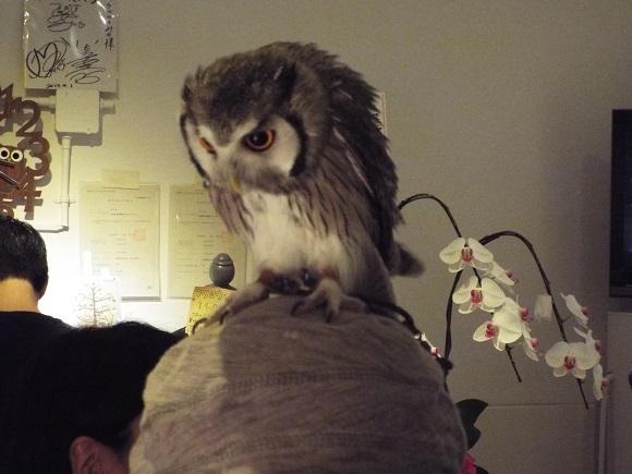owls (38)