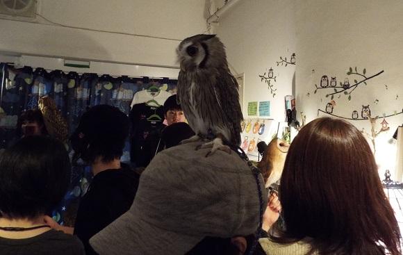 owls (39)