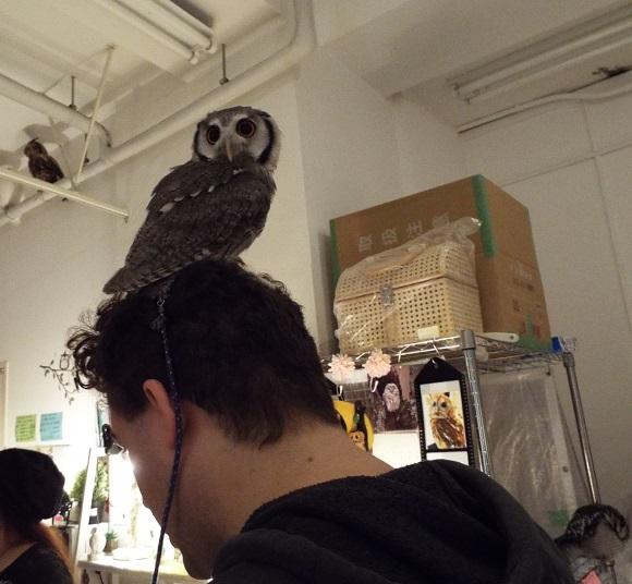 owls (41)