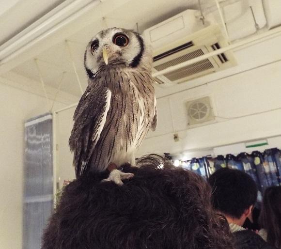 owls (42)