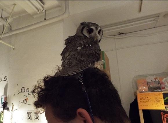 owls (43)