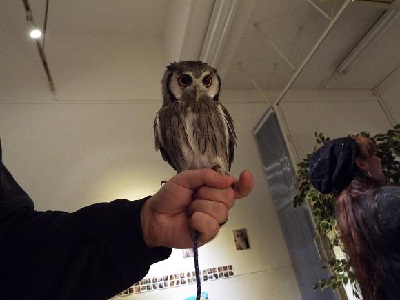 owls (44)