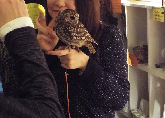 owls (45)