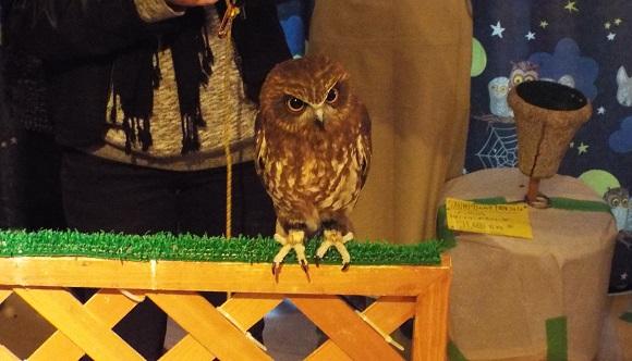 owls (46)