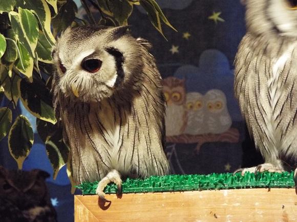 owls (49)
