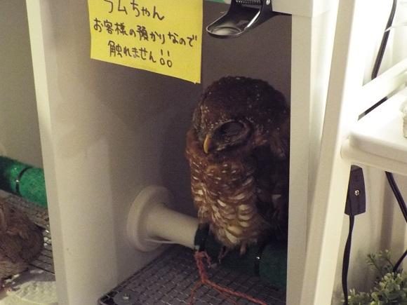 owls (50)