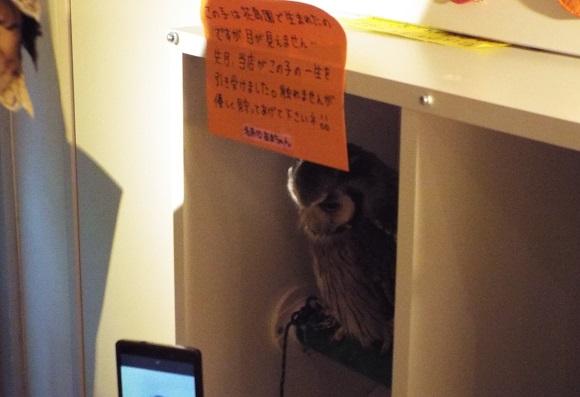 owls (51)