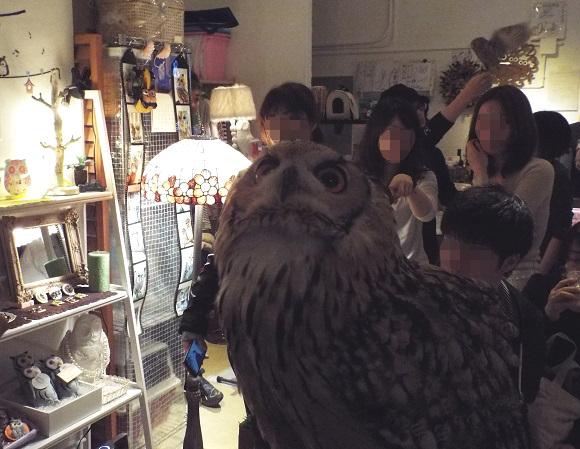 owls (6)
